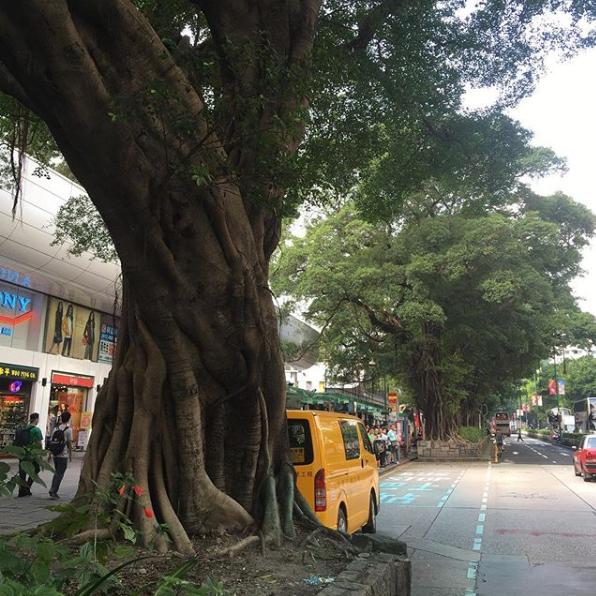 【藍色的古樹 是被警「保護」還是毒害?】